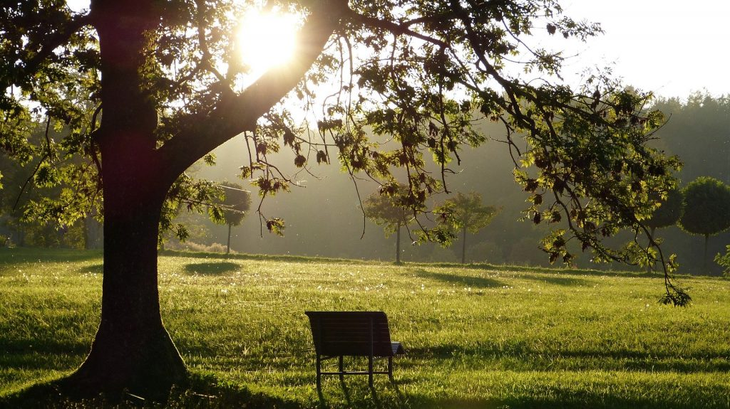 landscape with trees, sun and bench under the tree